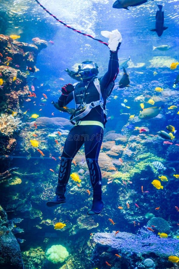 Scuba-duiker in tropische tank met Overzeese schepselen bij het aquarium de V.S. van Georgië met scuba-duikers in tank stock afbeelding