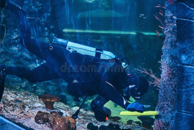 Scuba-duiker zwemmen onderwater in een oceanarium royalty-vrije stock afbeelding