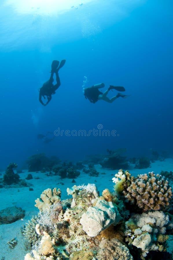 Scuba-duikers en koraal royalty-vrije stock fotografie