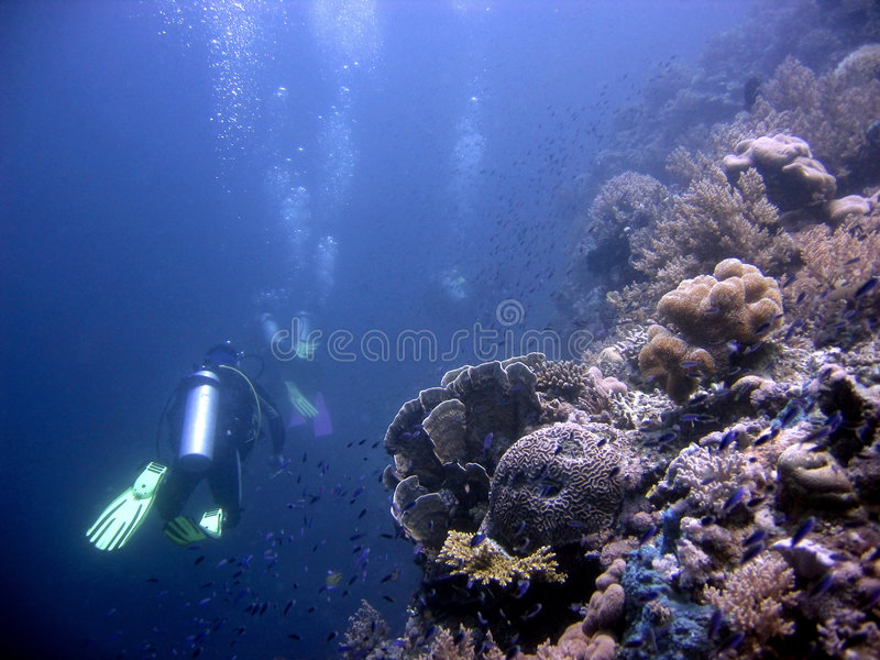 Scuba Haven. Scuba diving in a beautiful coral reef royalty free stock image