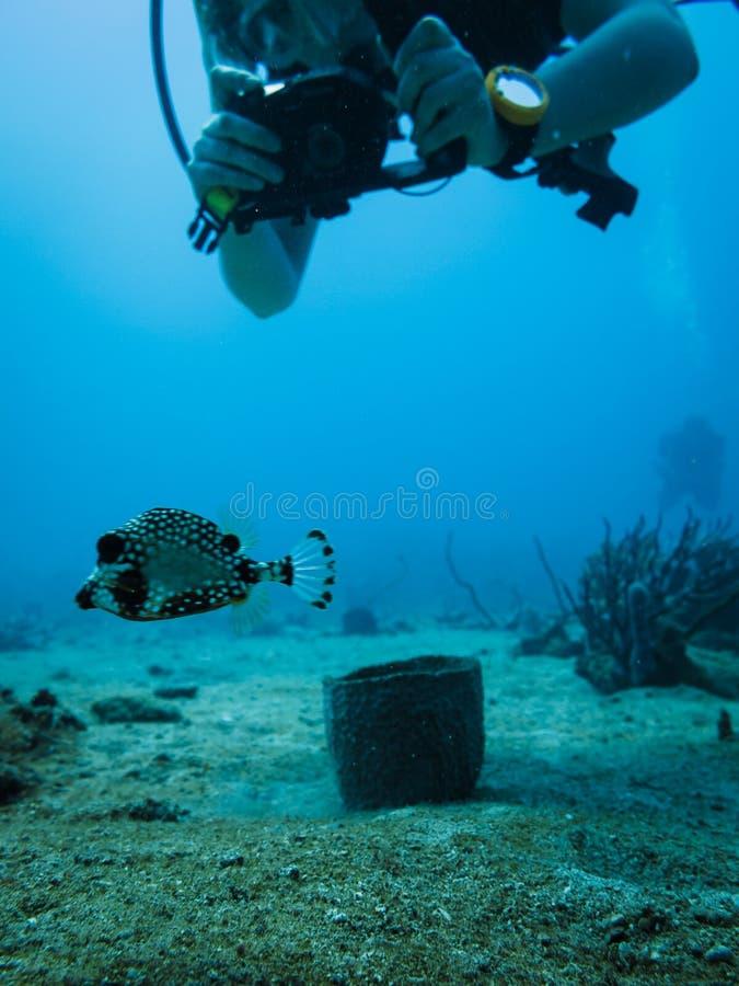 Scuba photographer and boxfish royalty free stock images