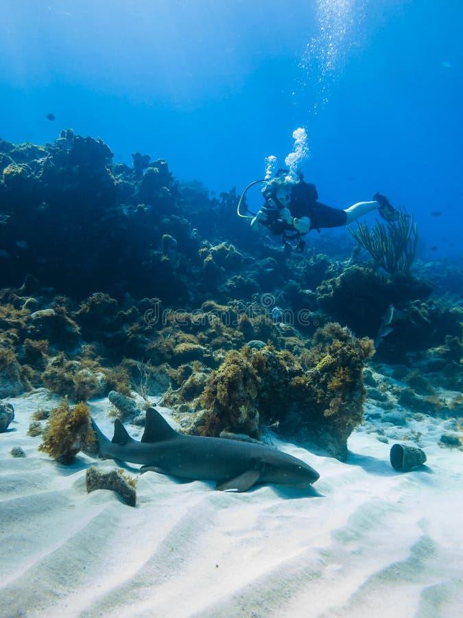 Scuba photographer and nurse shark stock photos