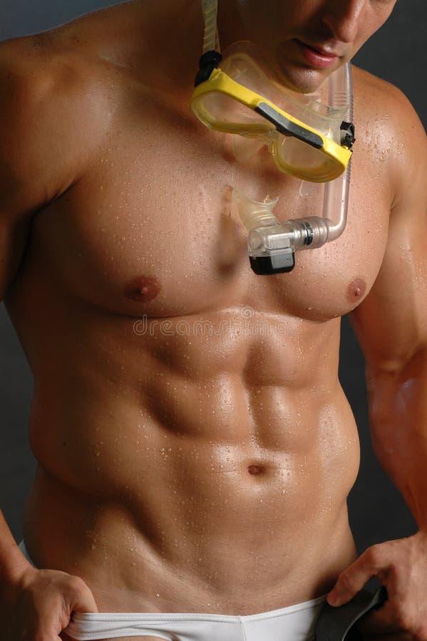 Scuba torso. Male scuba diver stock image