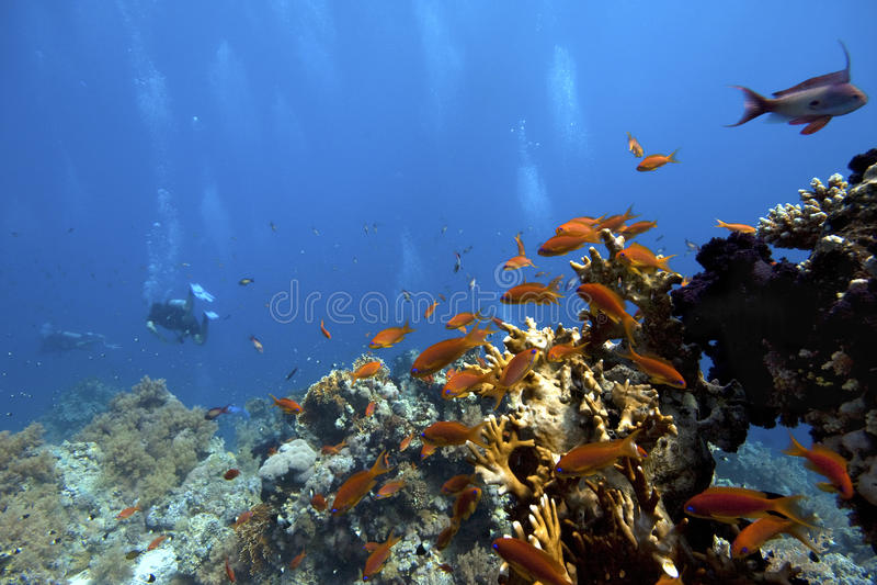 Scuba-uitrusting-duiker onderwater in tropische koraal-ertsader royalty-vrije stock foto's