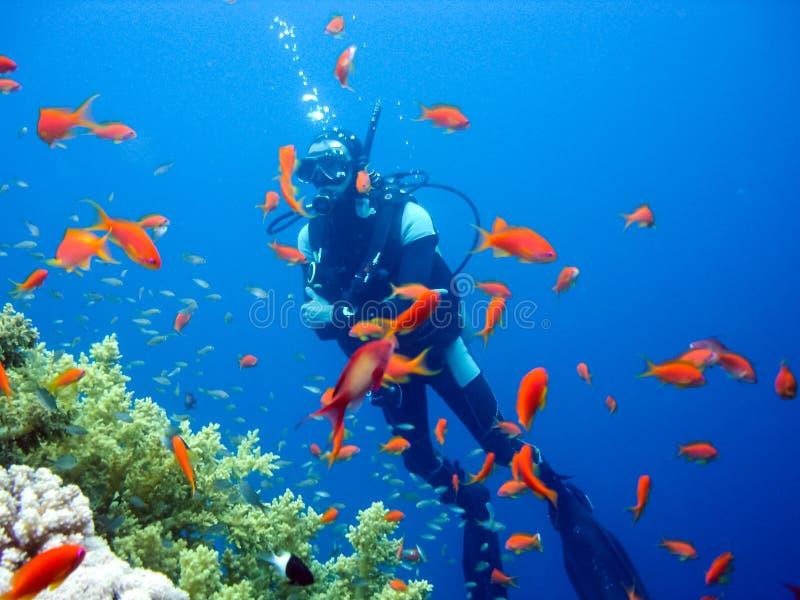 Scubadykare över korallreven bakgrundspojkedykning isolerade le white för maskeringsscuba arkivfoton