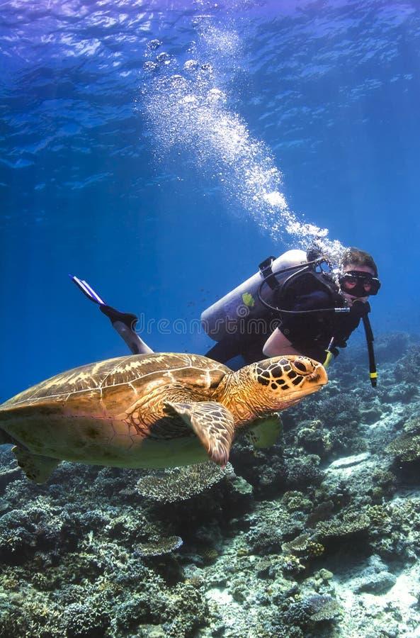 Scubadykaresimning med sköldpaddan royaltyfria bilder