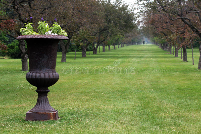 Sculpted plant urn in park. Plant in large sculpted ornamental urn with rows of landscaped trees receding into background stock photography