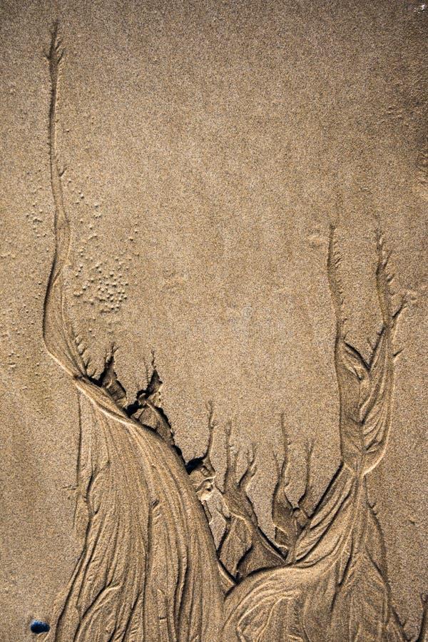 Sculptures en mer sur la texture de fond de sable photo libre de droits