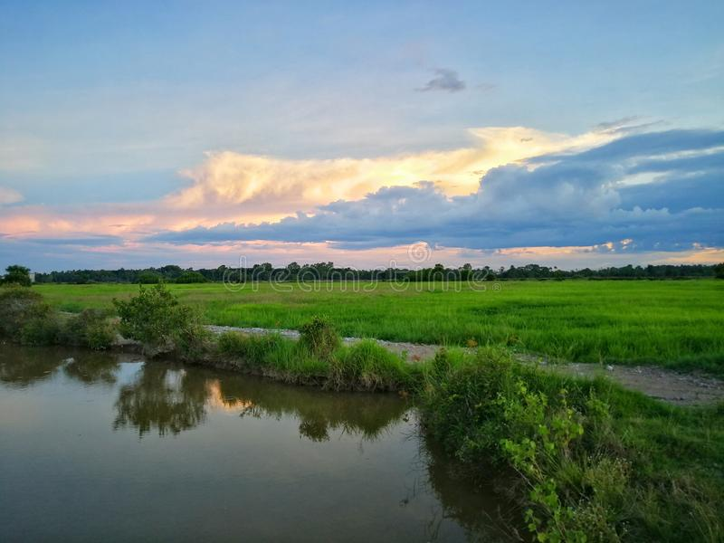 Beautiful view of rice paddy field during sunset in Malaysia. Nature composition. Sdr beautiful view rice paddy field sunset malaysia nature composition stock photos