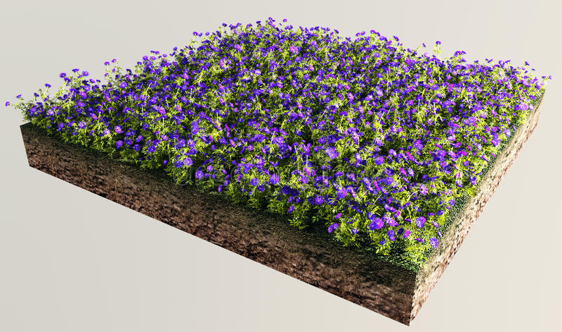 Seção de terra com jardim de flor fotografia de stock
