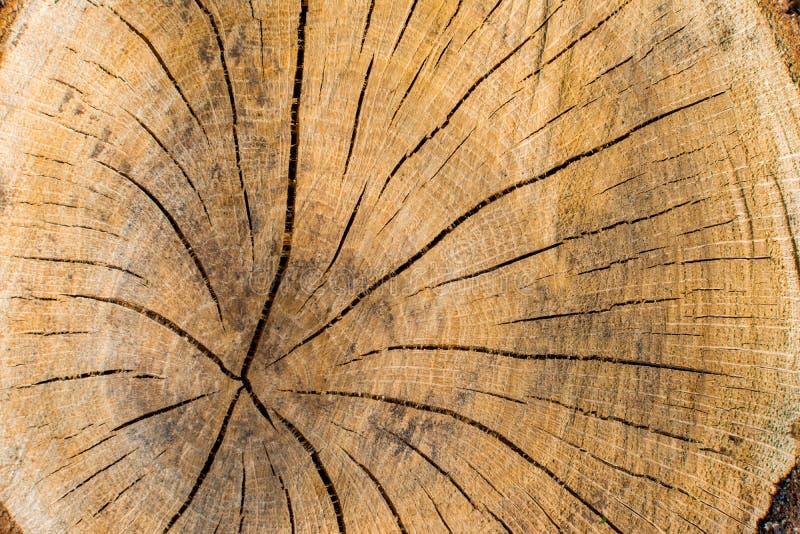 Seção do close-up da árvore, textura da conceito-cruz da proteção ambiental fotos de stock royalty free