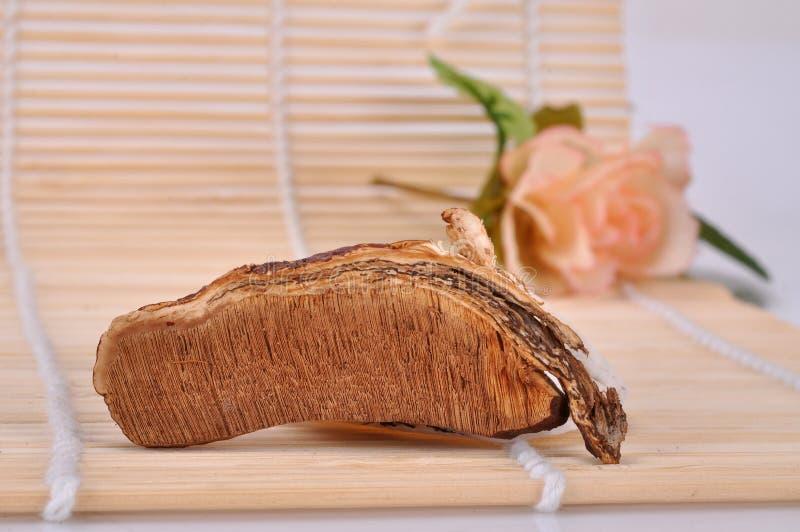 Seção do rizoma da seção- do lucidum de Ganoderma imagem de stock