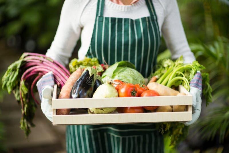 Seção mestra do jardineiro fêmea que guarda a caixa dos vegetais imagens de stock
