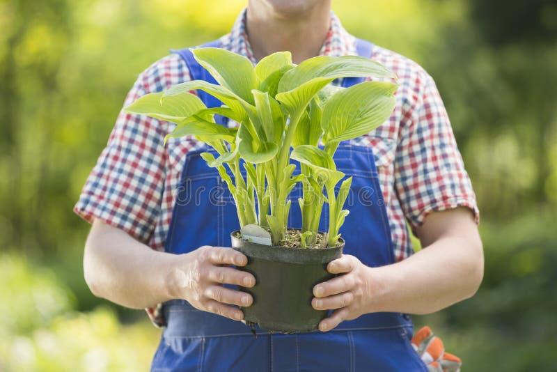 Seção mestra do jardineiro que guarda a planta em pasta no berçário foto de stock royalty free