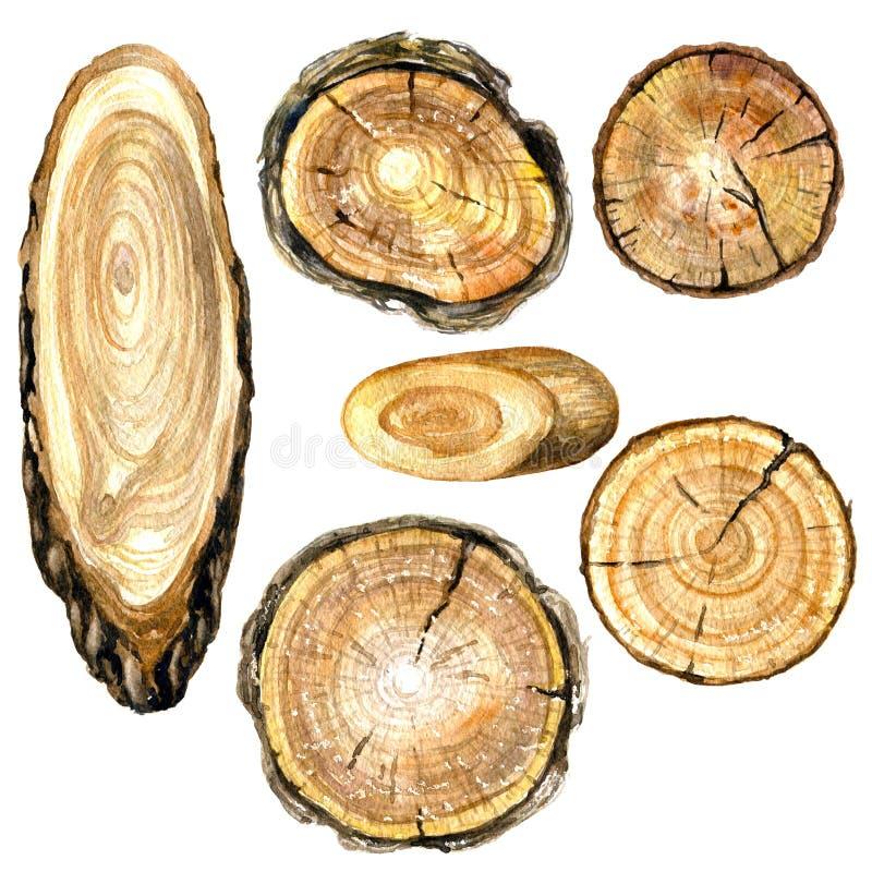 Seção transversal da aquarela do tronco de árvore ilustração royalty free