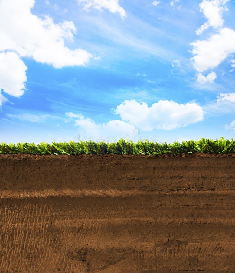 Seção transversal da grama com céu azul fotografia de stock royalty free