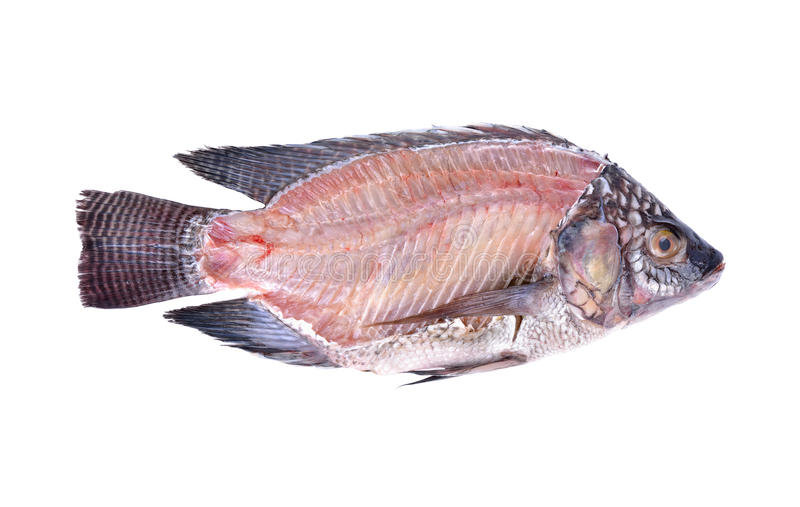 Seção transversal de peixes frescos de Nile Tilapia no fundo branco fotografia de stock