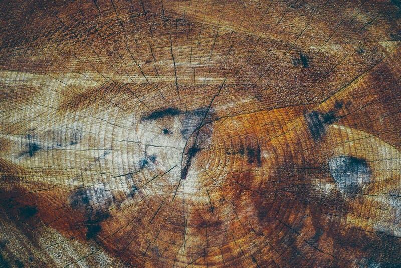 Seção transversal de um tronco de árvore fotos de stock royalty free