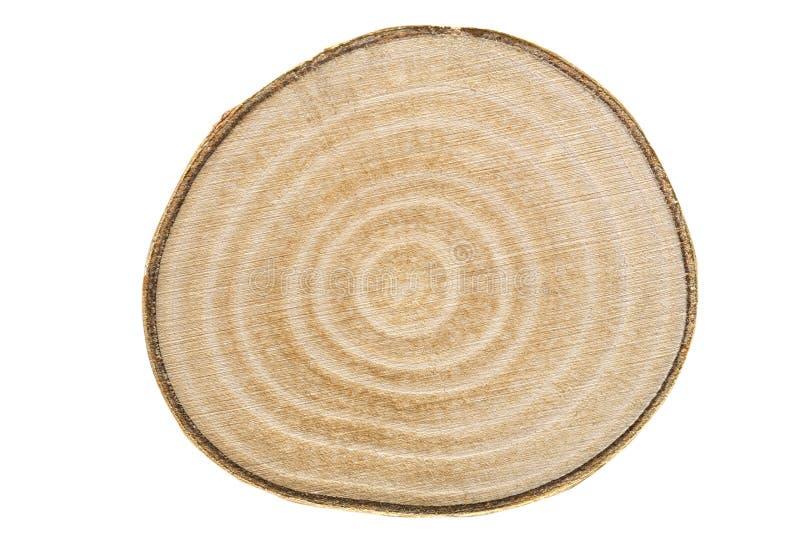 Seção transversal de um trunck da madeira de vidoeiro imagem de stock royalty free