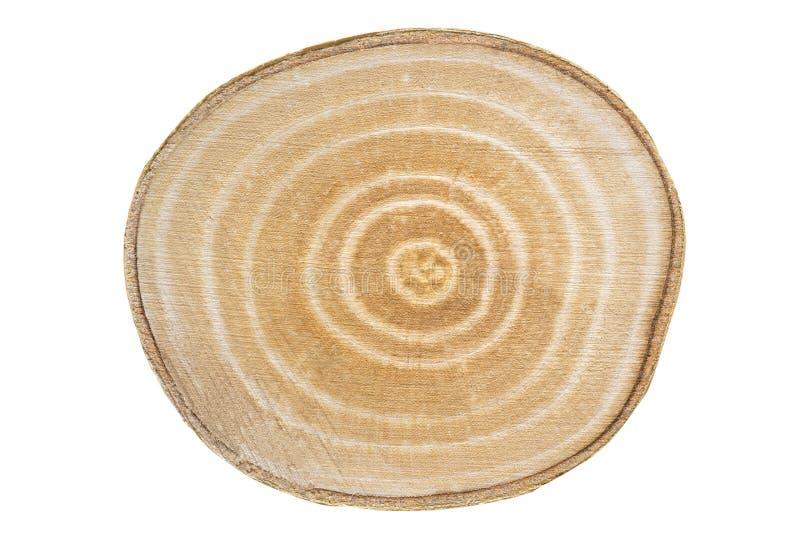 Seção transversal de um trunck da madeira de vidoeiro foto de stock
