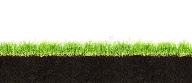 Seção transversal do solo e da grama imagens de stock