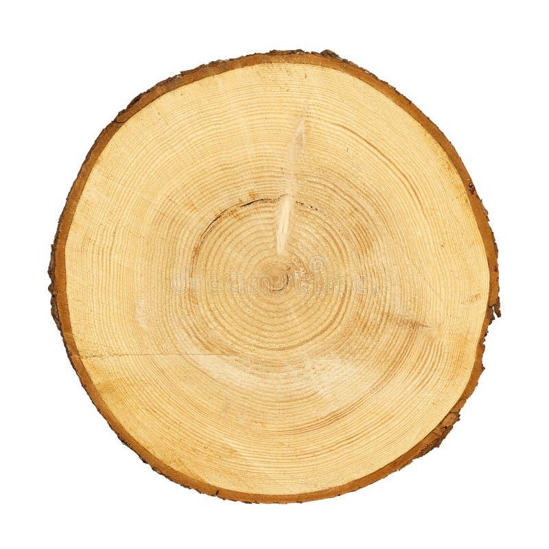 Seção transversal do tronco de árvore imagens de stock royalty free