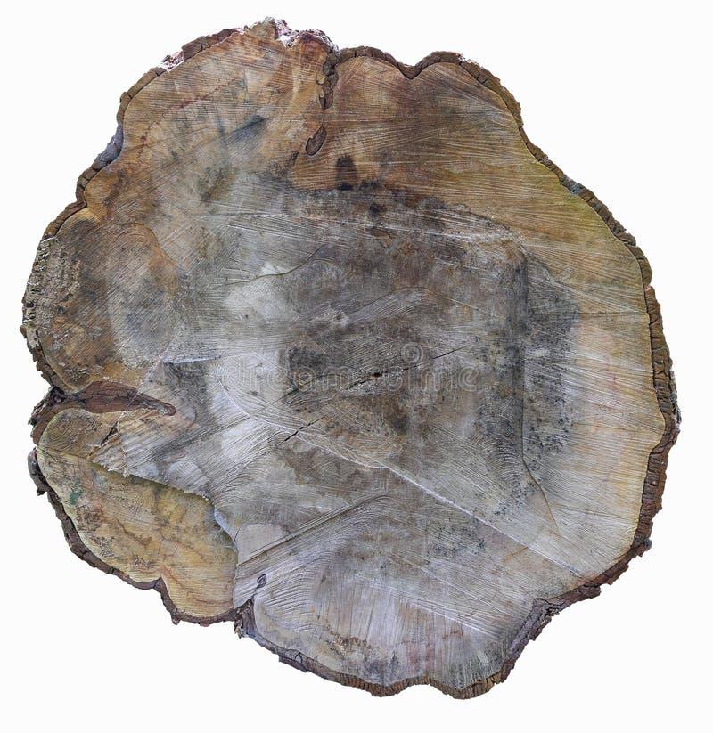 Seção transversal do tronco de árvore isolado no branco foto de stock royalty free