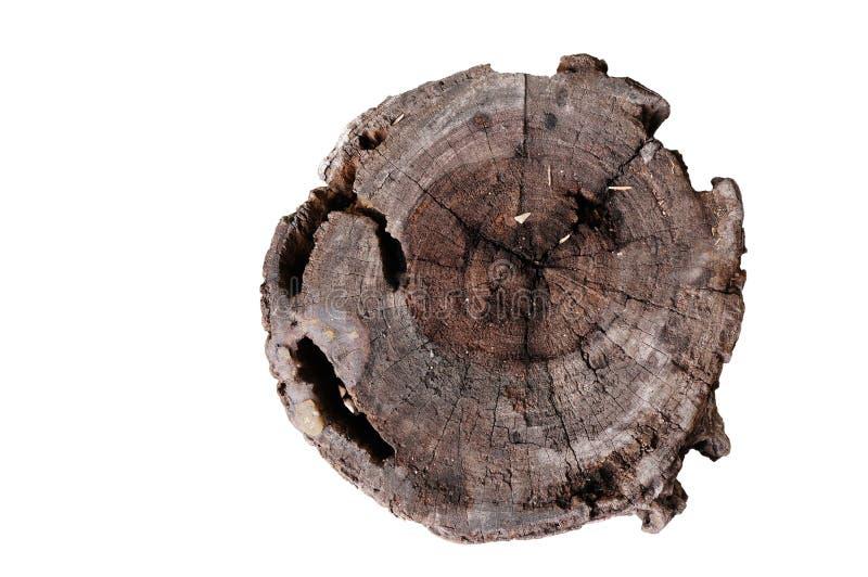 Seção transversal do tronco de árvore isolado no fundo branco imagens de stock royalty free