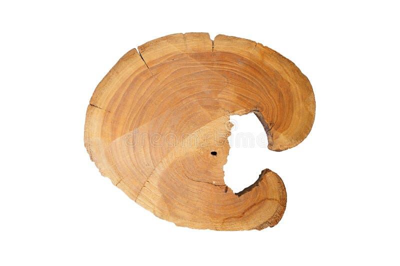Seção transversal do tronco de árvore isolado no fundo branco fotografia de stock