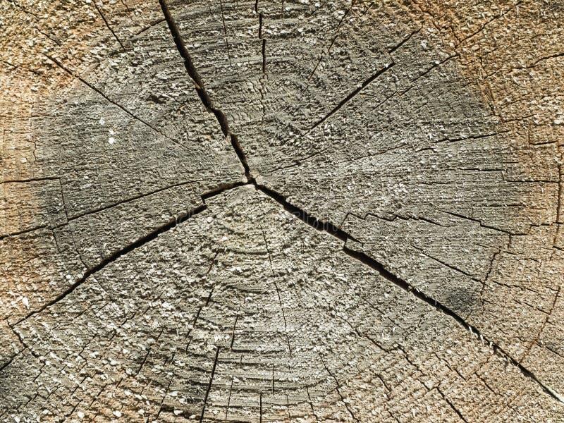 seção transversal do tronco de árvore velho fotos de stock royalty free