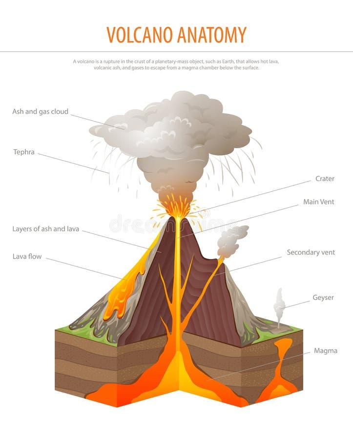 Seção transversal do vulcão, vetor do cartaz da educação ilustração do vetor