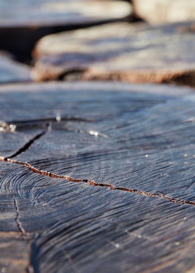Seção transversal natural do tronco de árvore com textura e quebra foto de stock