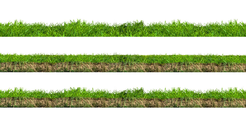 Seções da grama verde fotografia de stock royalty free