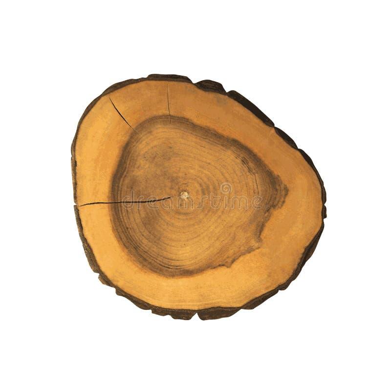 Seções transversais do coto de árvore ilustração do vetor