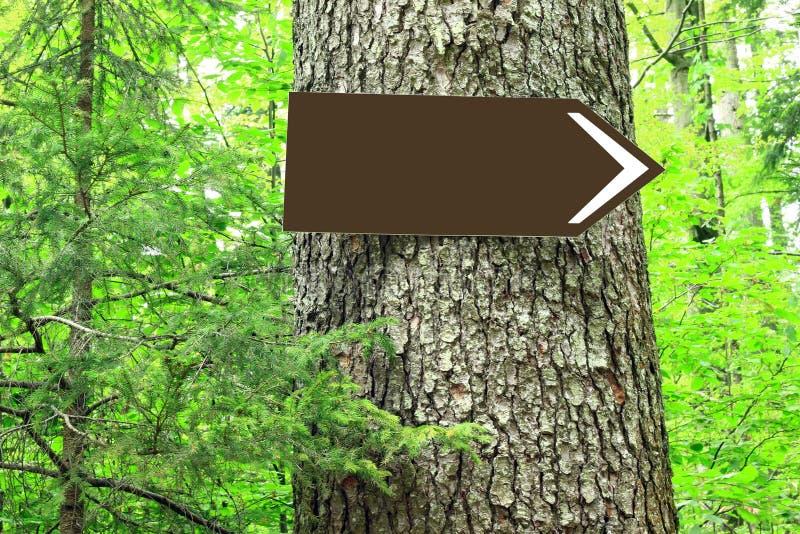Señal de dirección en blanco en árbol imágenes de archivo libres de regalías