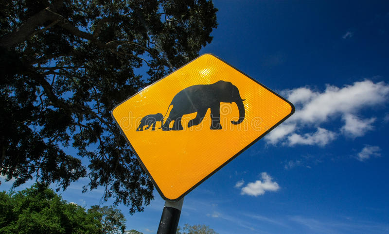 Señal de peligro amarilla del elefante al lado del camino debajo del cielo azul imágenes de archivo libres de regalías