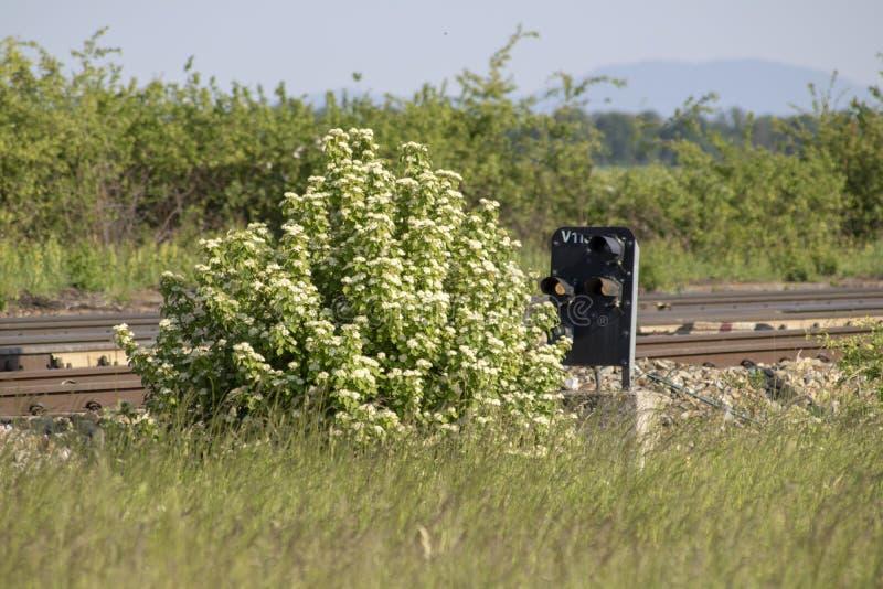 Señal del ferrocarril bloqueada por un arbusto imágenes de archivo libres de regalías