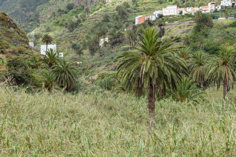 Señal natural del La Hermigua en el La Gomera Día soleado - zona rural típica - palmeras, plantaciones de plátano, huertas y fotografía de archivo