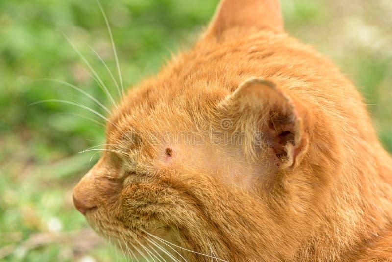Se?al que alimenta en gato, cierre para arriba foto de archivo libre de regalías
