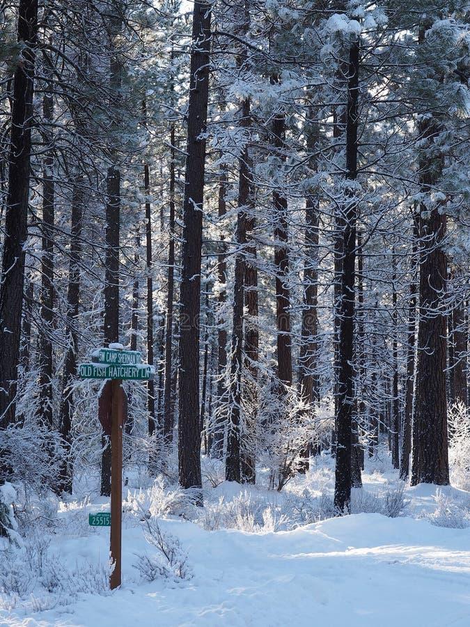 Señales de tráfico cubiertas en nieve fotografía de archivo