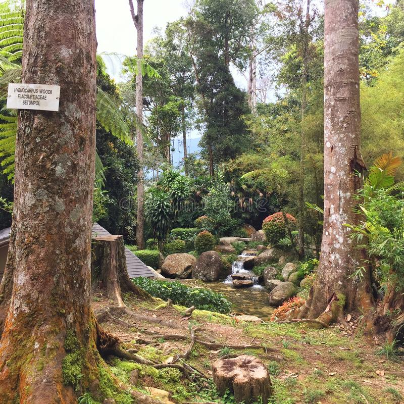 señalización de no fumadores en bosque cubierto de musgo fotografía de archivo libre de regalías