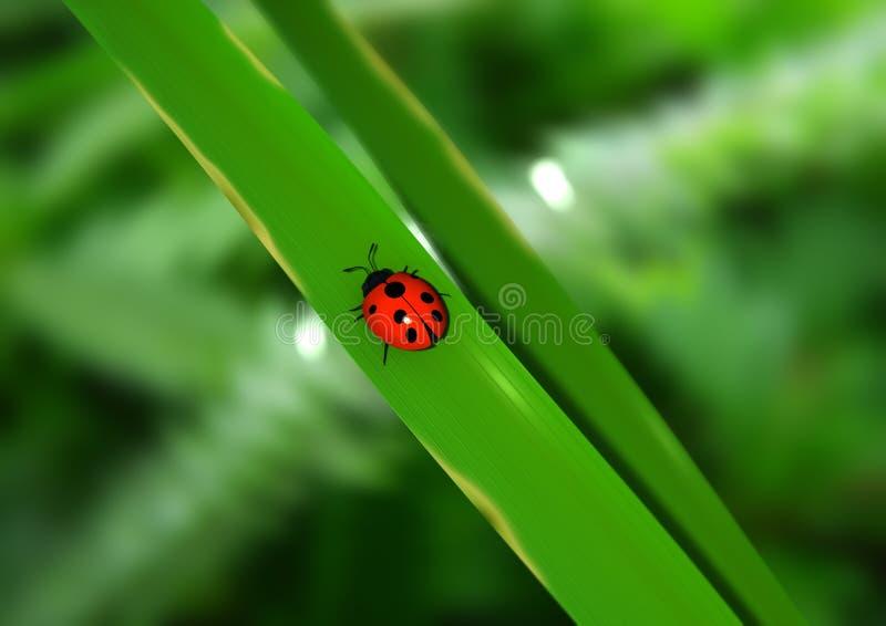 Señora Bug foto de archivo