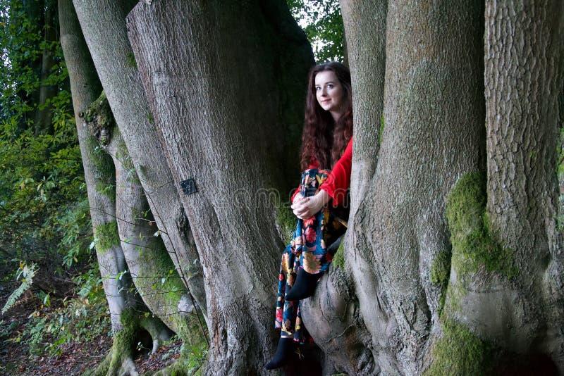 Señora de moda que se sienta en un árbol de haya foto de archivo libre de regalías