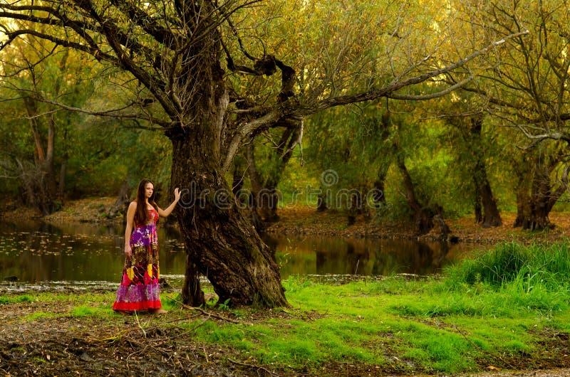 Señora elegante que se coloca al lado de árbol viejo foto de archivo libre de regalías