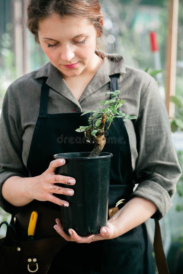 Señora linda joven que trabaja en el invernadero foto de archivo libre de regalías