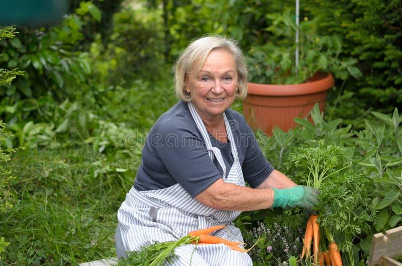 Señora mayor en el jardín que sostiene zanahorias imagenes de archivo
