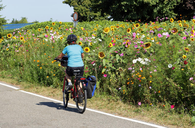 Señora que completa un ciclo por un campo de wildflowers coloridos imagenes de archivo