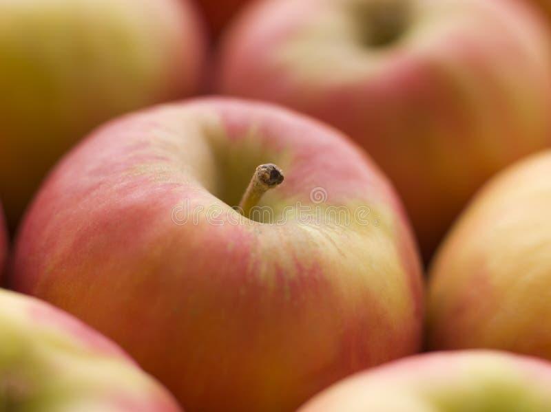 Señora rosada manzanas foto de archivo libre de regalías