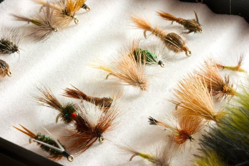 Señuelos de la trucha en rectángulo de la mosca foto de archivo