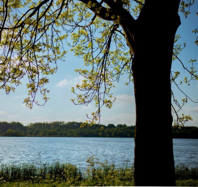 Se över vattnet till den blå himlen genom det stora trädet, naturens sammansättning. royaltyfri fotografi